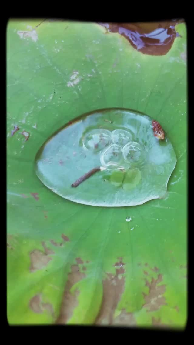 Watch and share Bubble Leaf GIFs by Jackson3OH3 on Gfycat