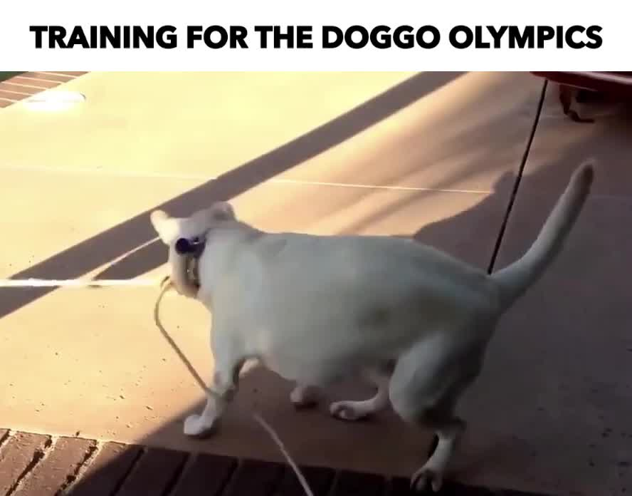 Dogg olympics GIFs