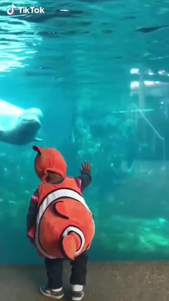 Watch and share Seaworld Fantasy Ended GIFs on Gfycat