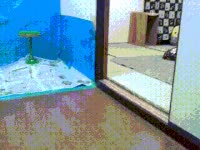 Watch owl, in, excited, hello, ovo GIF on Gfycat. Discover more related GIFs on Gfycat