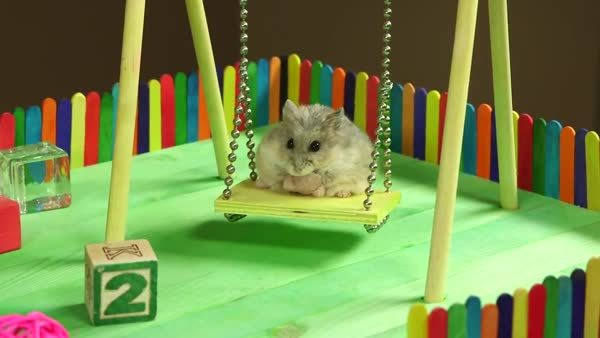 awwgifs, Tiny Hamster in a Tiny Playground (reddit) GIFs