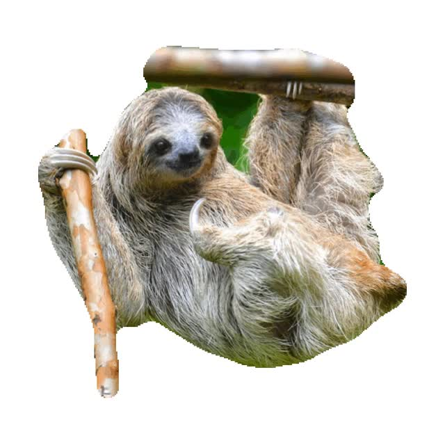 Watch and share Sloth GIFs on Gfycat