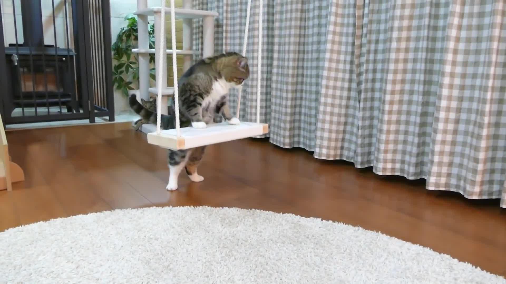 Maru, cat, kitten, kitty, maru, pets, ねこ, まる, 猫, ブランコとねこ。-Swing and Maru.- GIFs