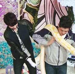 gif, hello, hello counselor, his reactions are so cute lolol :3, infinite, look at him walking away from the snake while eunji is actually holding one herself LOL, woohyun, destiny  GIFs
