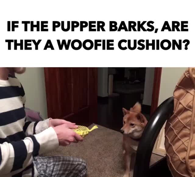 Watch and share Shibainu GIFs and Puppy GIFs by Reactions on Gfycat