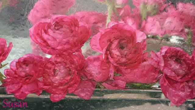 Watch Flores en la lluvia GIF by Susan (@susanlu4esm) on Gfycat. Discover more Flores gif GIFs on Gfycat