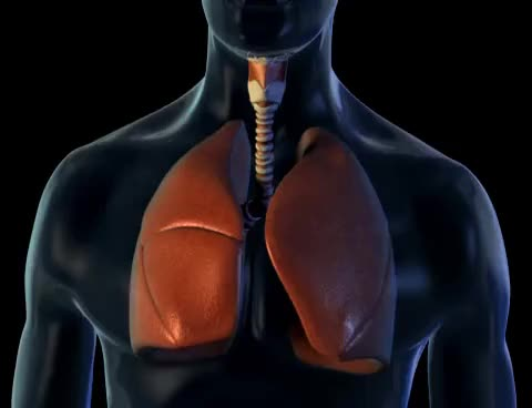 Watch Lungs and Breathing - 3D Medical Animation || ABP © GIF on Gfycat. Discover more related GIFs on Gfycat