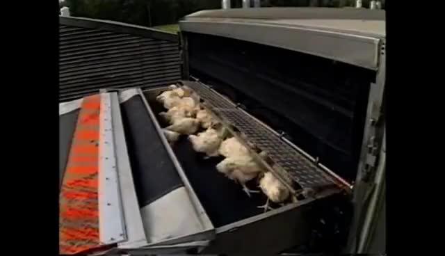 Automação em apanha e transporte de aves - Seguridade GIFs