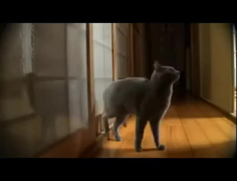 Watch and share Cat Knocking On The Door GIFs on Gfycat