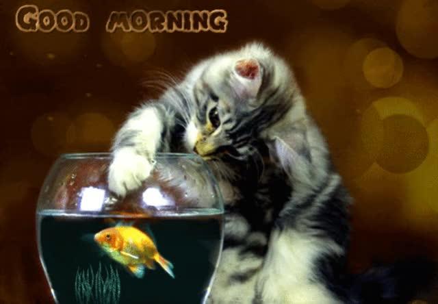 Watch ezgif-1-7890a70a6a (1) GIF by Ineta Zebele (@inetik) on Gfycat. Discover more aquarium, cat, fish GIFs on Gfycat