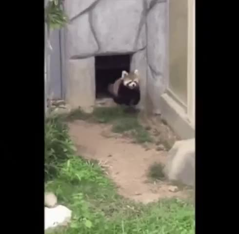 Watch and share This Gif Made My Day Damnthatsinteresting GIFs by psy_ok on Gfycat