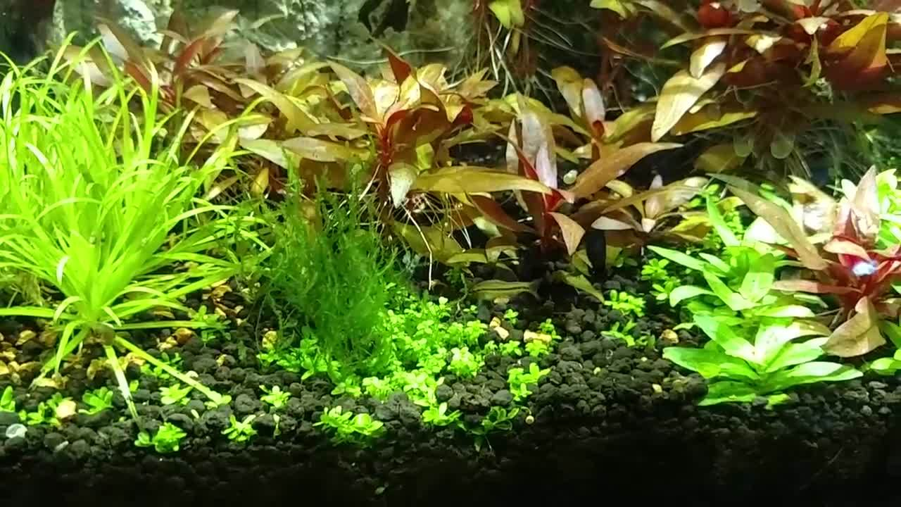 friends, plantedtank, January 23, 2016 GIFs