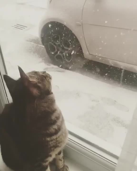 aww, cat, cute, snow, /r/AnimalsBeingConfused - from sonzibarbie GIFs