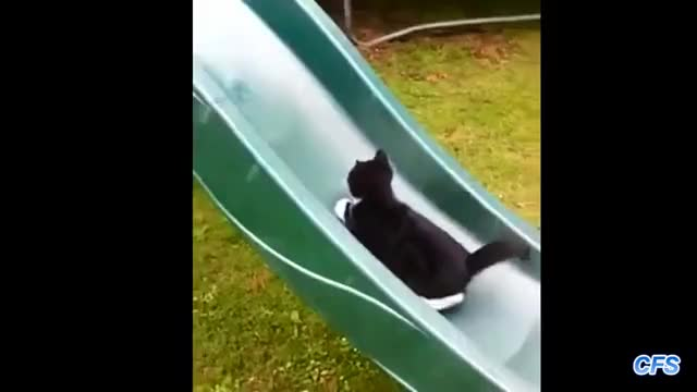 Watch and share Compilation GIFs and Kittens GIFs on Gfycat
