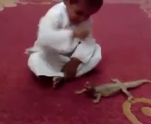 Watch Lizard gets revenge (reddit) GIF on Gfycat. Discover more askreddit, idiotsfightingthings GIFs on Gfycat