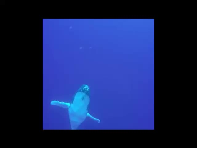 Watch and share Nature GIFs and Whales GIFs by Human on Gfycat