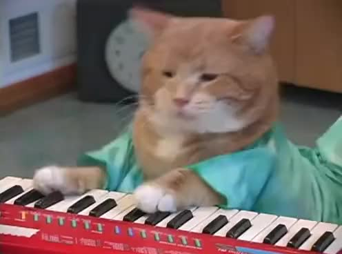 Watch keyboard cat GIF on Gfycat. Discover more cat, cute, keyboard GIFs on Gfycat