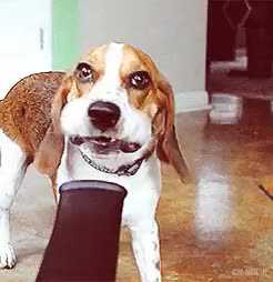 Watch and share Funny Dog Mouth Blower GIFs on Gfycat