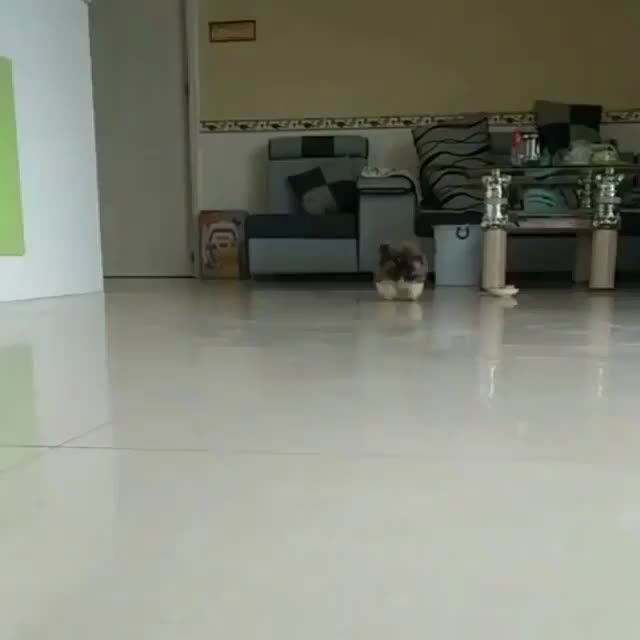 Watch Taking over the world 1 little step at a time - GIF on Gfycat. Discover more Barked by 9GAG, barked, doggo, pupper GIFs on Gfycat