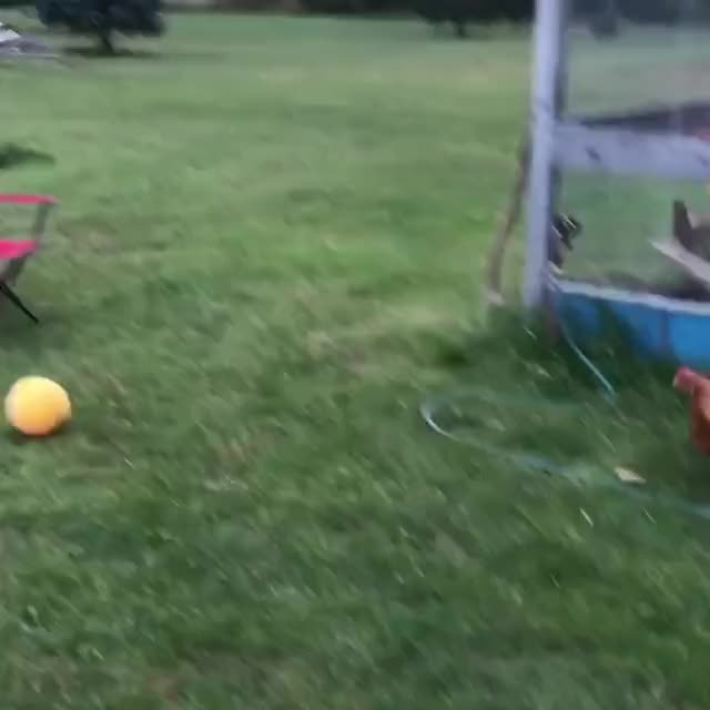 Watch and share Soccer Chicken GIFs and Bird Soccer GIFs by lnfinity on Gfycat