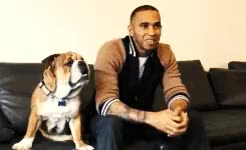 Watch this trending GIF on Gfycat. Discover more Lewis hamilton, cute, pupp, roscoe GIFs on Gfycat