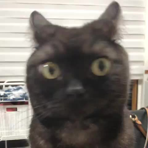 cat, cats, funny, mfw, mrw, reaction gif, MRW I hear someone call out my name in public GIFs