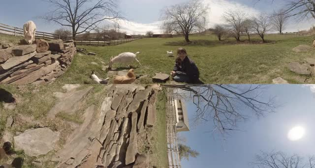 Watch and share Farm Sanctuary VR Tour Experience! GIFs on Gfycat