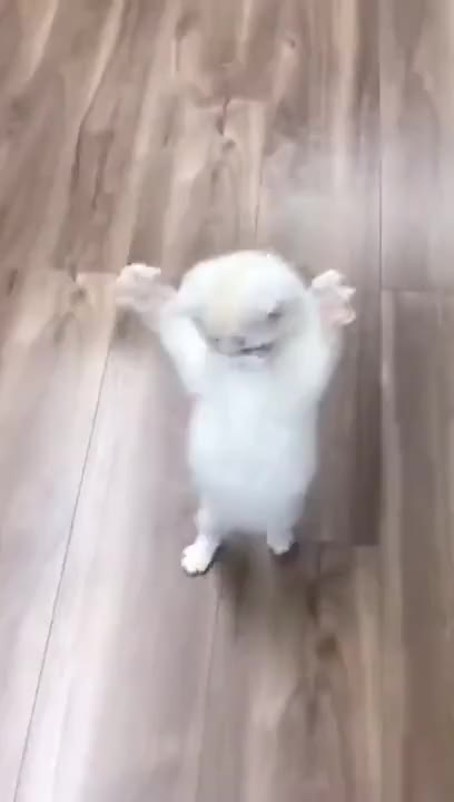 Watch and share Are You Scared Human? 👻 GIFs by The Future Wizard on Gfycat
