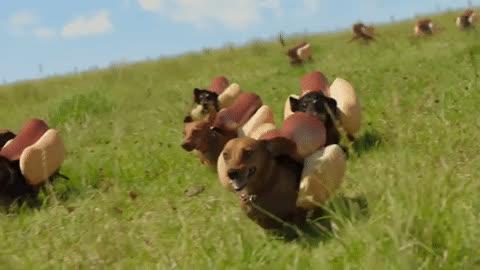puppies GIFs