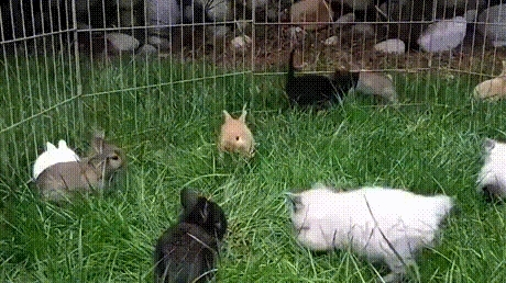 fluffy, kittens, twoxchromosomes, Kittens & rabbits GIFs