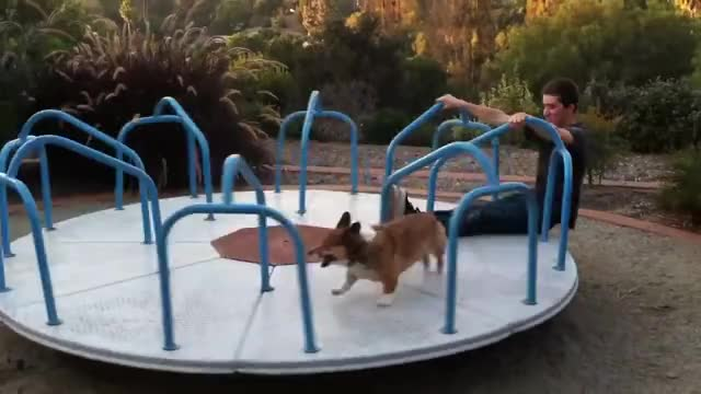 Watch and share Corgilove GIFs and Corgi GIFs by sphenoid on Gfycat