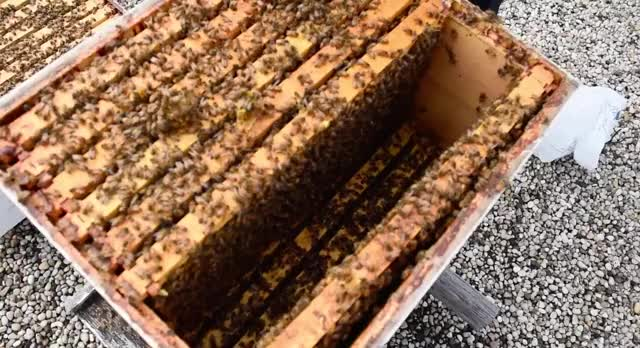 Watch and share 30,000-40,000 Bees Live On The Roof GIFs by Hilary Brueck  on Gfycat