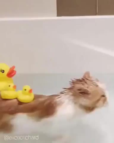Watch and share He Loves Baths As Long There Are Plenty Of Rubber Ducks To Play With. GIFs by caiserzero on Gfycat