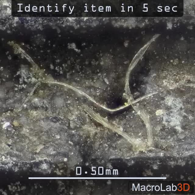 Watch and share Macrolab3d GIFs and Microscopy GIFs by MacroLab3D on Gfycat
