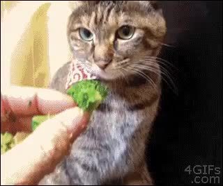 Watch Pussycat tax GIF on Gfycat. Discover more related GIFs on Gfycat