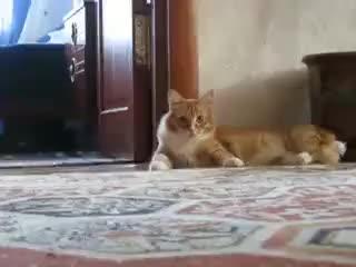 Watch and share Ooo GIFs on Gfycat