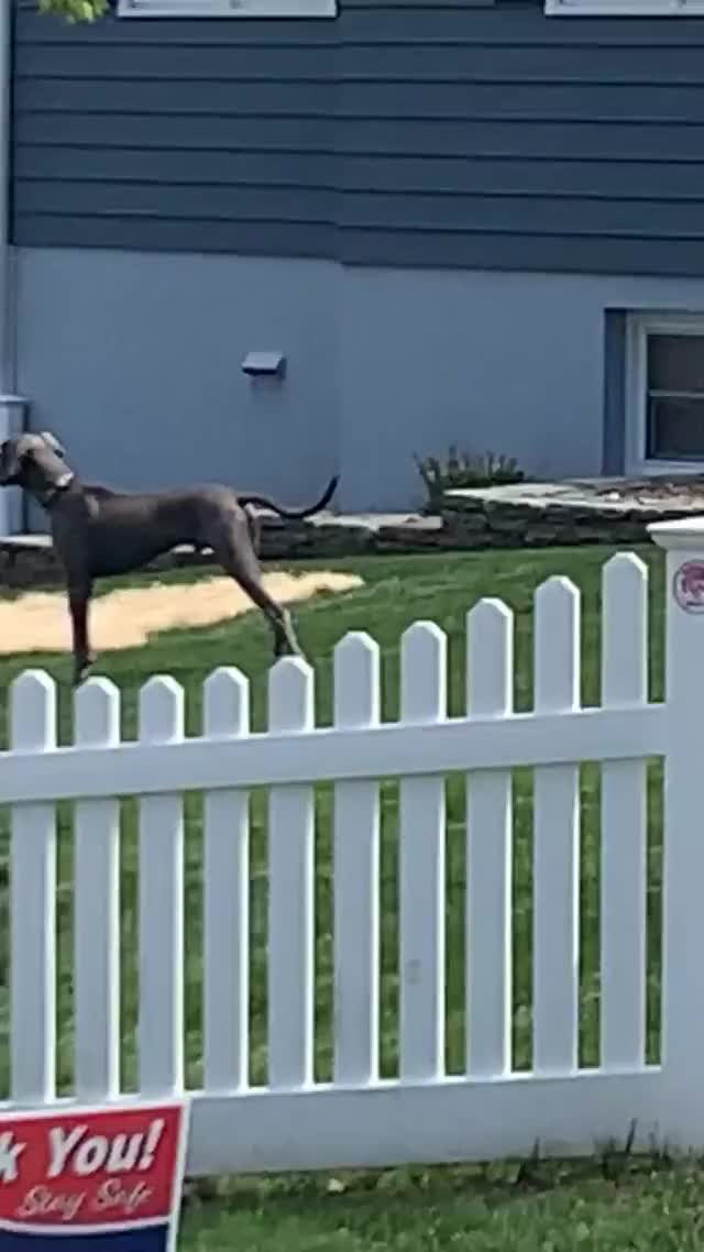 Watch and share Taowickrath - 2020-05-04 02:09:58:090 GIFs by Bobby Bee on Gfycat