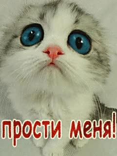 Watch and share Прости Меня GIFs on Gfycat