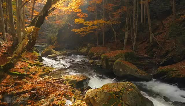 Watch and share Autumn Forest - Relaxing Nature Video - River Sounds - White Water - HD - 1080p GIFs on Gfycat