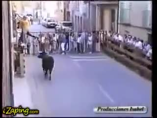 Bull calms down when he recognizes his feeder