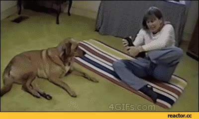 Watch yoga GIF on Gfycat. Discover more related GIFs on Gfycat