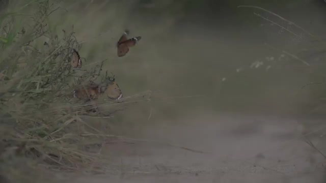 Watch and share Butterfly GIFs by Londolozi Game Reserve on Gfycat