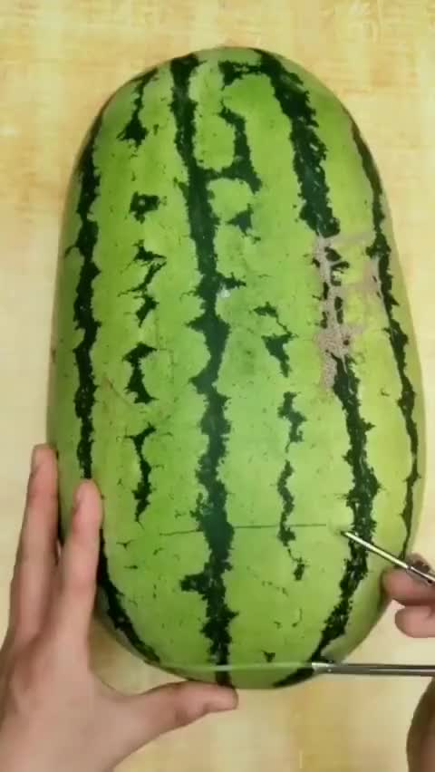 Watch this humanapproved GIF on Gfycat. Discover more watermelon lantern GIFs on Gfycat