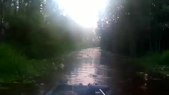 "Watch ""Feeding Frenzy"" gators in Georgia river GIF by Beef (@is_it_beef) on Gfycat. Discover more related GIFs on Gfycat"