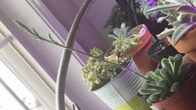 Watch and share Plants GIFs on Gfycat