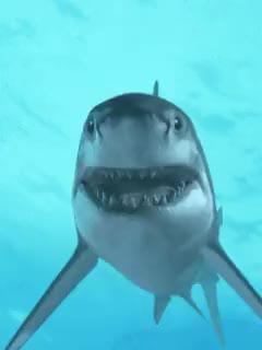 Watch and share Tiburones GIFs and Gifmania GIFs on Gfycat