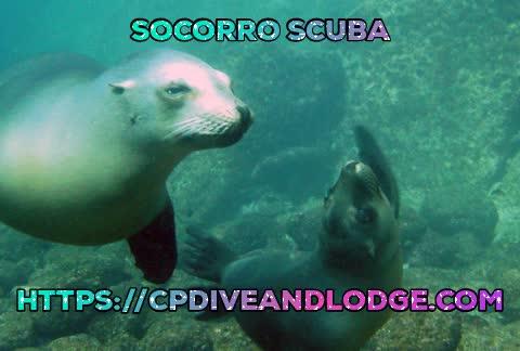 Cabo Pulmo hotel, Cabo Pulmo snorkeling, Snorkel en cabo pulmo, Socorro Scuba, cabo pulmo hospedaje, Socorro Scuba GIFs