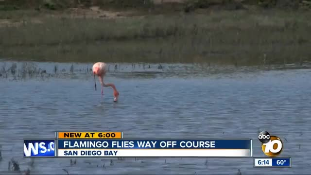 Watch and share Flamingo GIFs on Gfycat