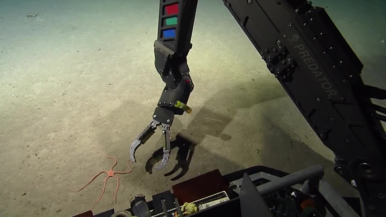 shittyrobots, whatisthisthing, Weird sea creature with 5 tentacles (reddit) GIFs
