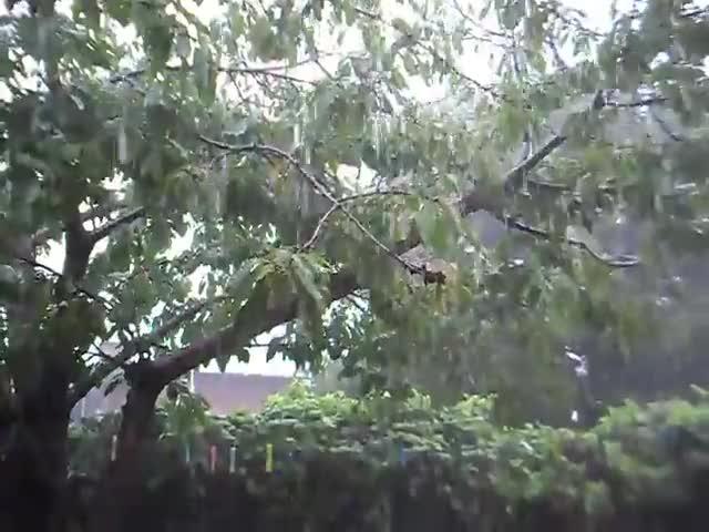 Watch Lluvia GIF by LincesaMdq (@lincesamdq) on Gfycat. Discover more lluvia, lluvia en mar del plata, rain GIFs on Gfycat
